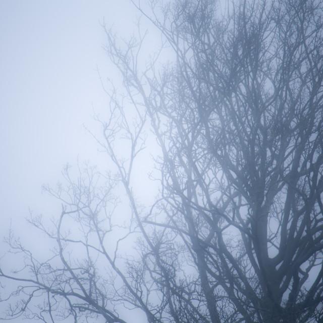 """Foggy Tree"" stock image"