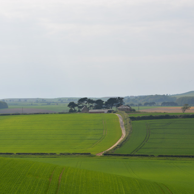 """""""Rolling Hills and Farmland"""" stock image"""