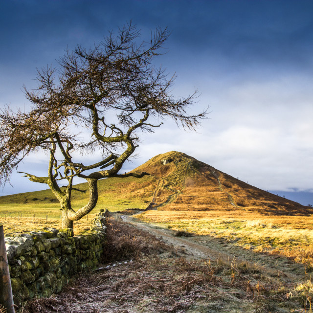 """Rosebery Topping and Larch Tree From The East."" stock image"