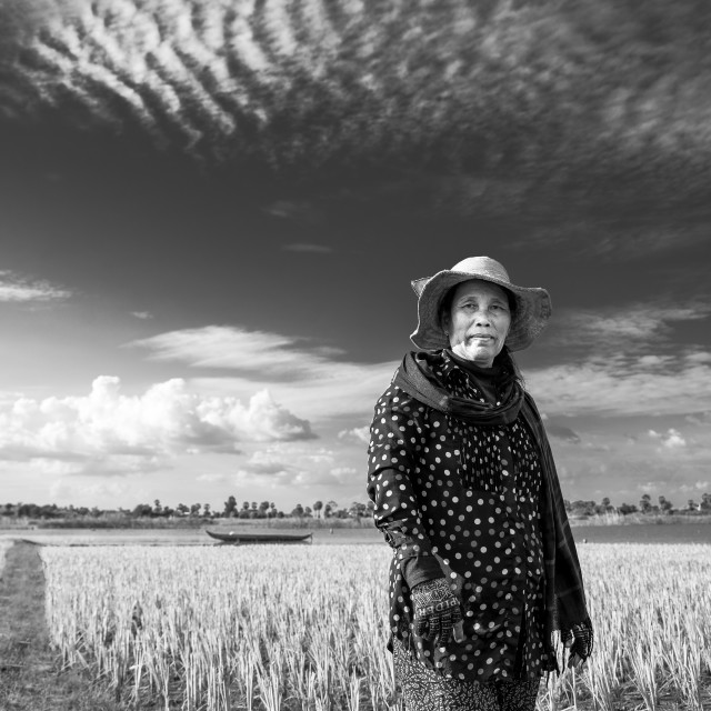 """Cambodian farmer"" stock image"