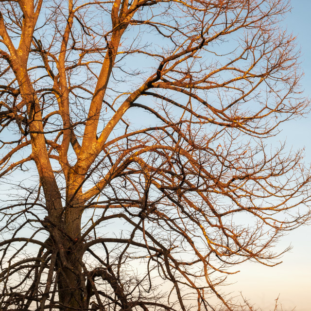 """""""Winter tree branches. Color image"""" stock image"""
