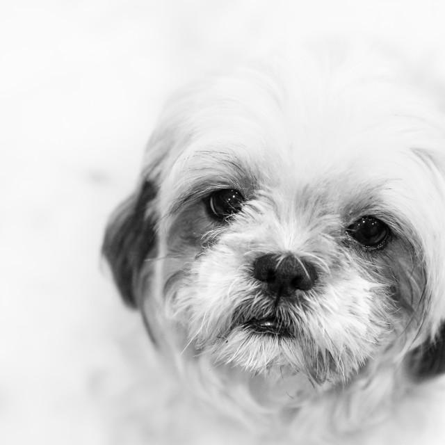 """""""Dog in highkey #2"""" stock image"""