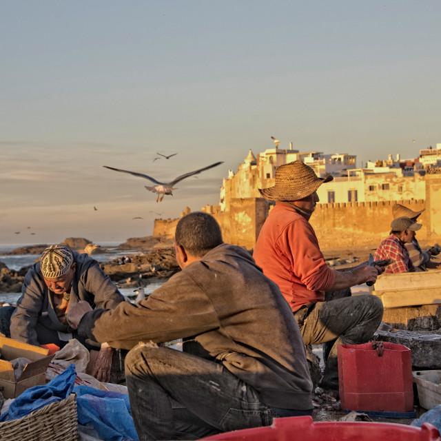 """Fishermen at dusk, Essaouira Port, Morocco"" stock image"
