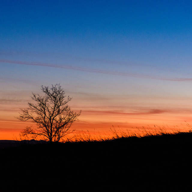"""""""Tree and sunset"""" stock image"""