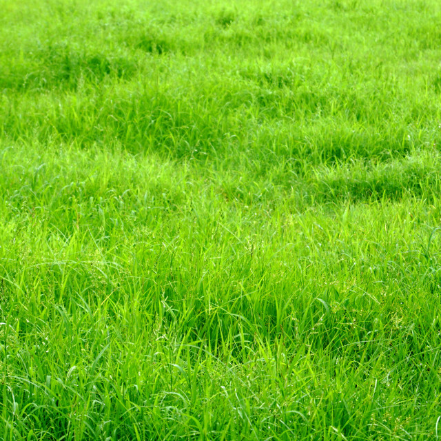 """Grass"" stock image"