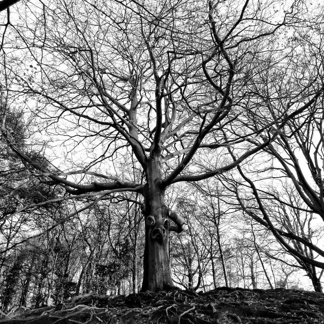 """Spooky Tree-2"" stock image"