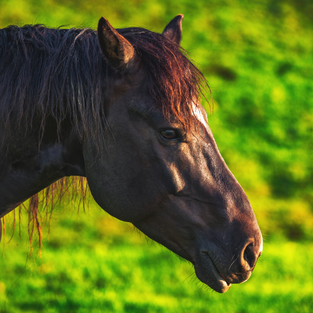 """Mystic sunrise over the mountain. Wild horse grazing in the mead"" stock image"
