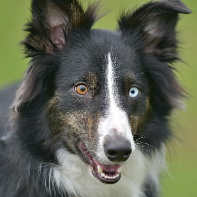 """""""agility dog"""" stock image"""