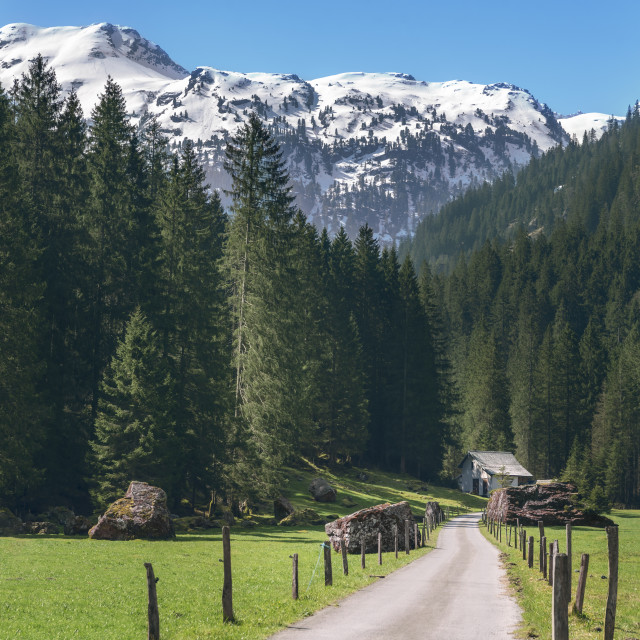 """Road toward the green forest and the Swiss Alps. Spring landscape in the..."" stock image"