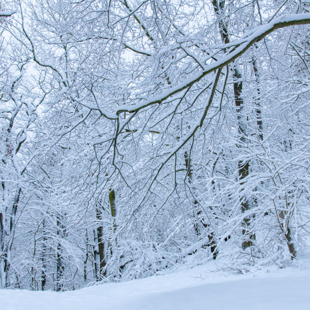 """Snowy Forest In Harz"" stock image"