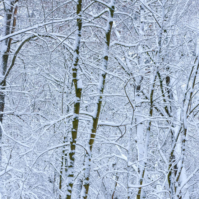 """Bare Trees In Winter"" stock image"