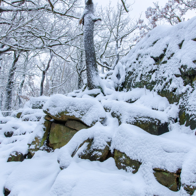 """Snow Covered Rocky Forest"" stock image"