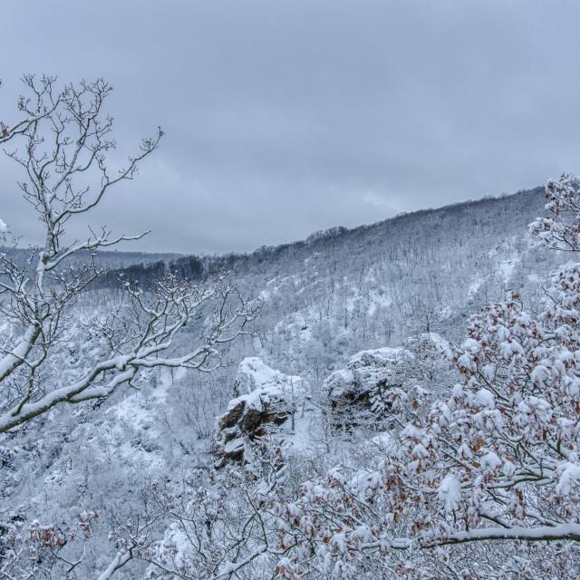 """Harz Region In Winter"" stock image"