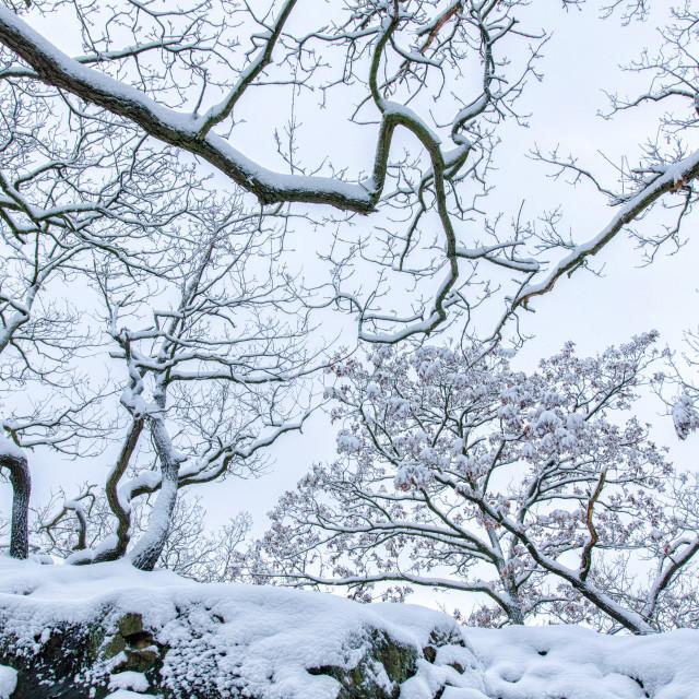 """Natural Winter"" stock image"