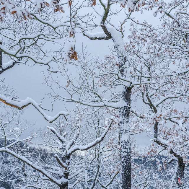 """""""Snowy Shapes Of Winter"""" stock image"""