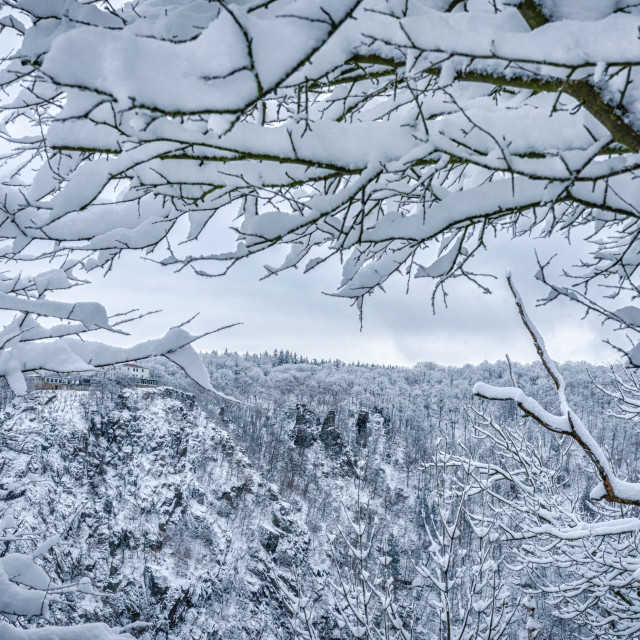 """Winter Scene In The Mountain Forest"" stock image"