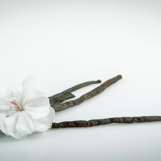 """""""Vanilla Pods And Flower"""" stock image"""