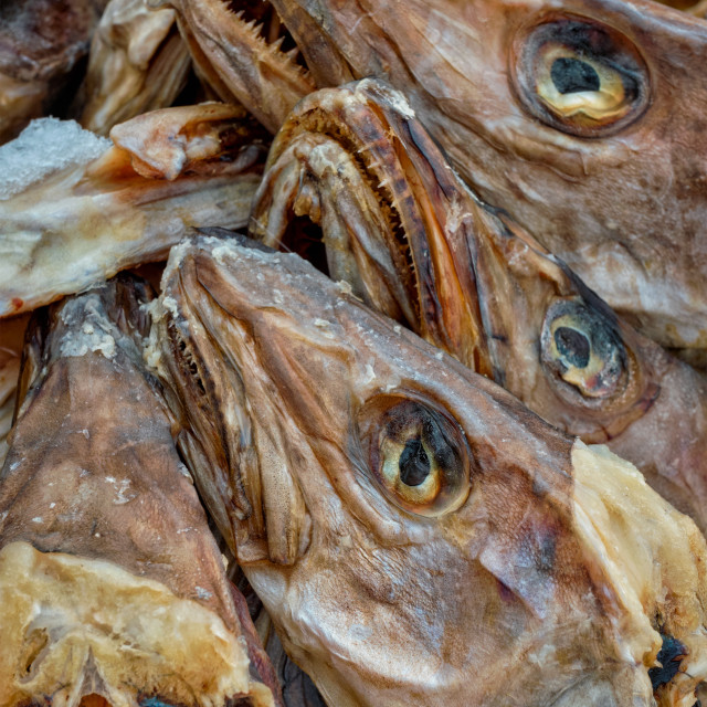 """""""Drying stockfish cod heads in Reine fishing village in Norway"""" stock image"""