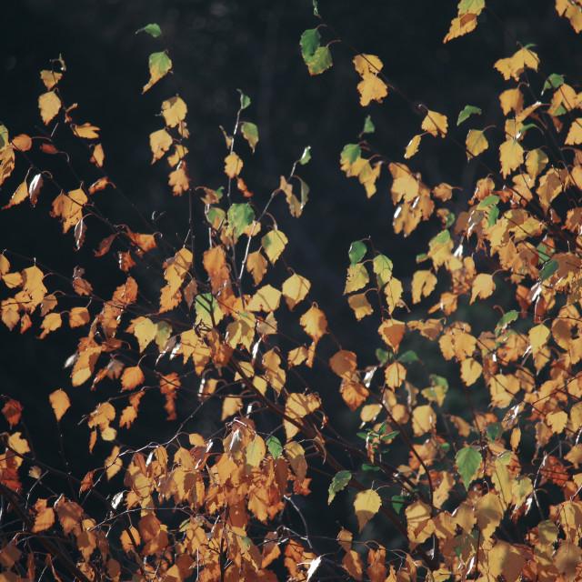 """""""November Leaves"""" stock image"""