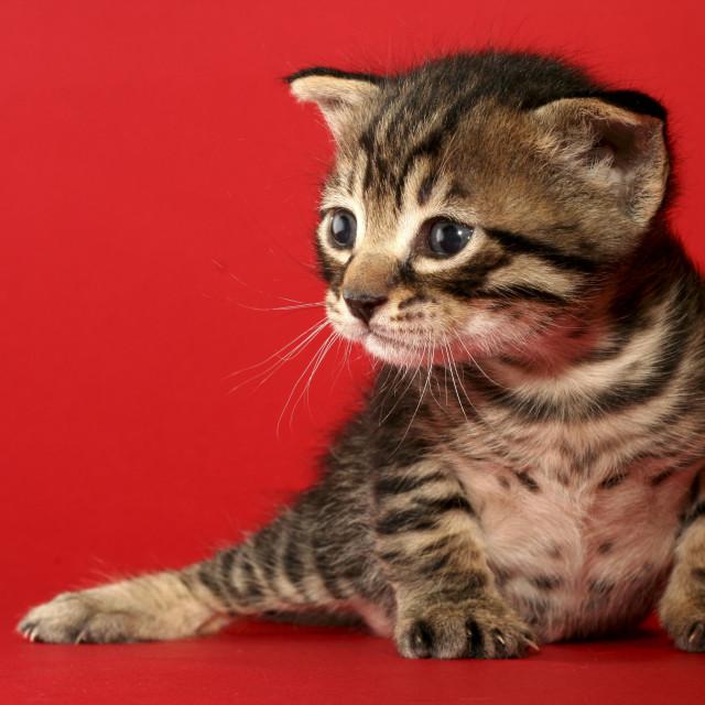 """one week old kitten"" stock image"