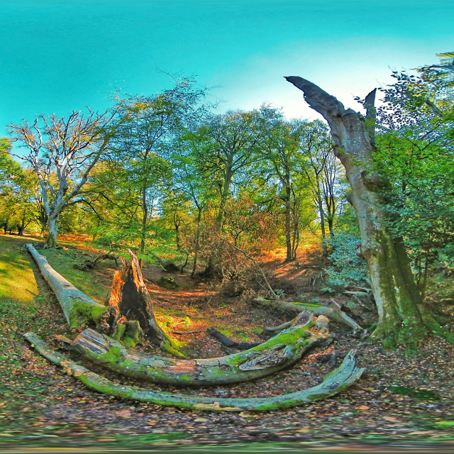 """""""New Forest (Equirectangular 360vr)"""" stock image"""