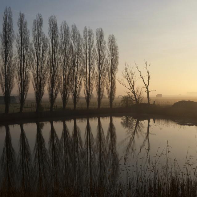 """""""Row of trees near Uppel"""" stock image"""