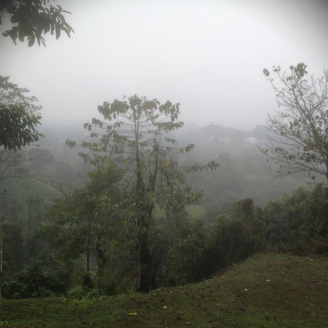 """Derricks in Indian Assam jungle"" stock image"