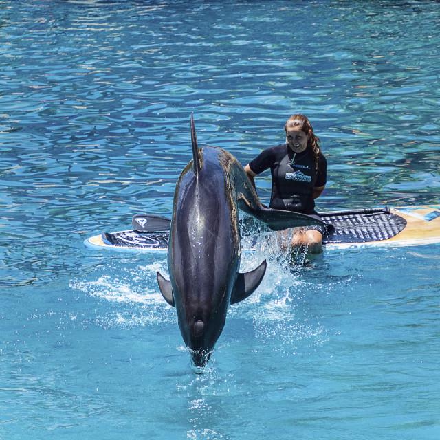 """Dolphin2"" stock image"