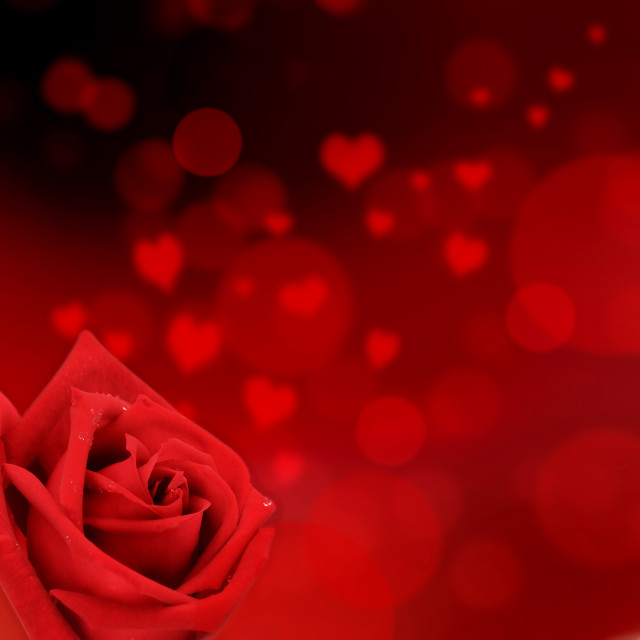 """valentine card with red rose"" stock image"