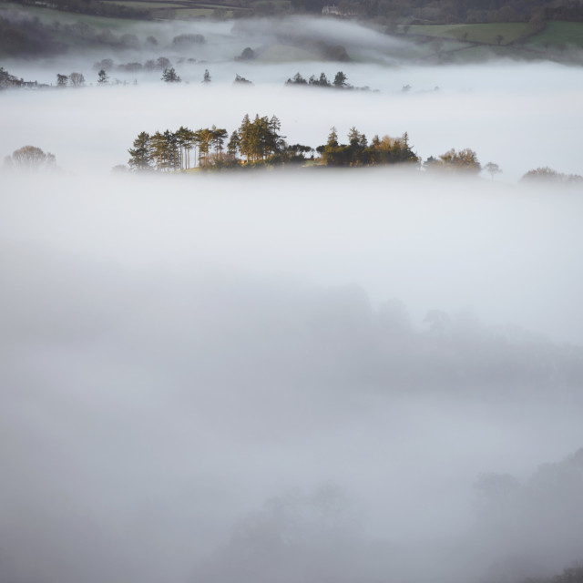 """""""Trees in the Mist II"""" stock image"""