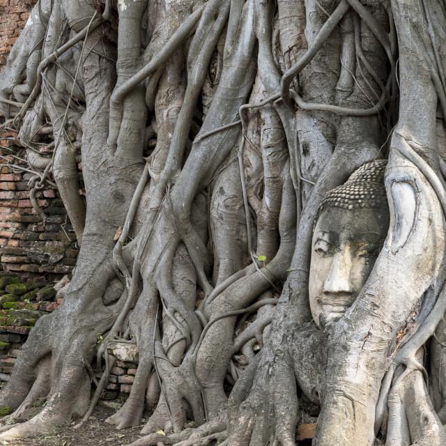 """Buddha Head, Attayutha, Thailand"" stock image"