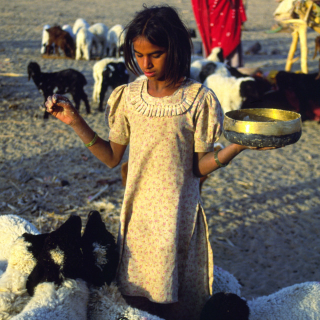 """THAR DESERT INDIA A young shepherd girl feeds her flock of goats."" stock image"