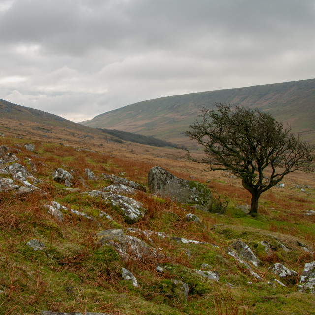 """""""Black Tor and Black-a-tor copse"""" stock image"""