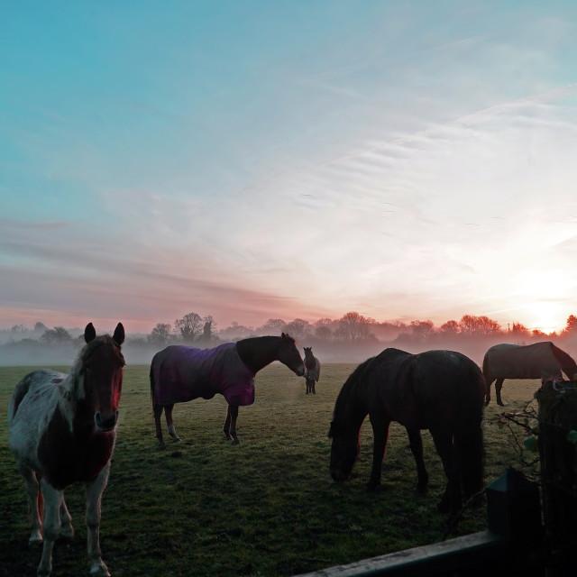 """""""Horses g raze under the sunrise"""" stock image"""