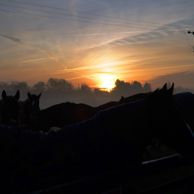 """Silhouette of horses under the sunrise"" stock image"