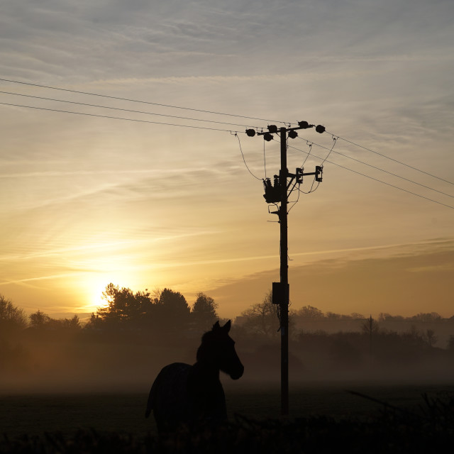 """The silhouette of a single horse at sunrise"" stock image"