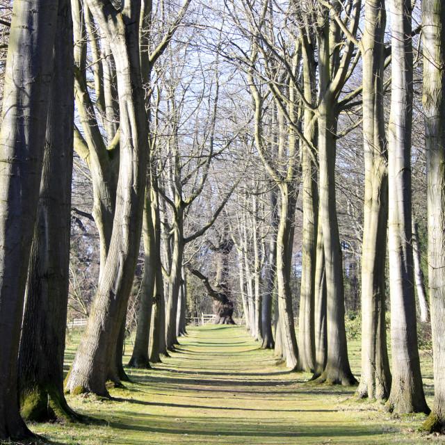 """Avenue of Trees."" stock image"