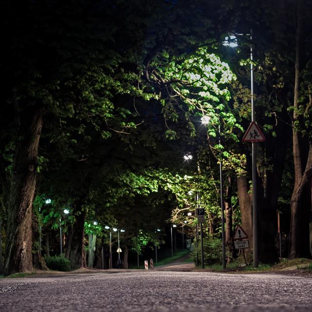 """Street Through The Park"" stock image"