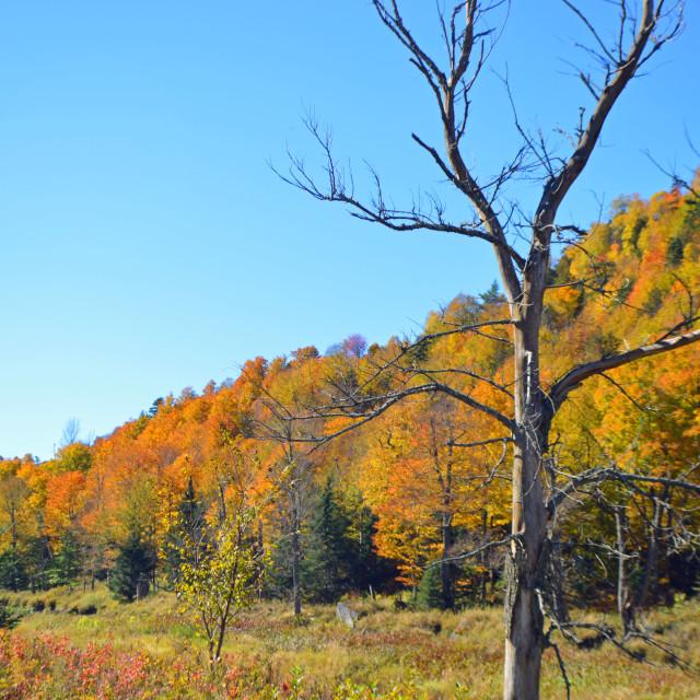 """Fall day in the Adirondacks"" stock image"