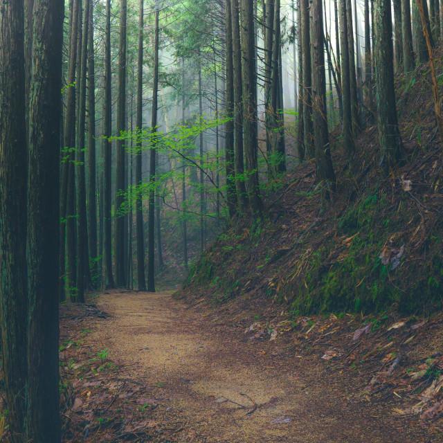 """""""Nagano - Japan"""" stock image"""