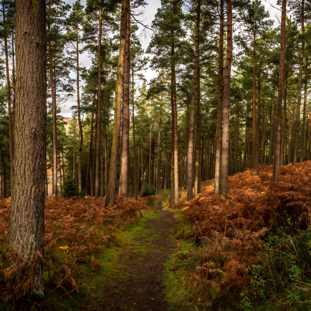 """""""To The Trees Pano"""" stock image"""