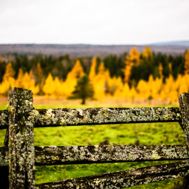 """The old fence"" stock image"