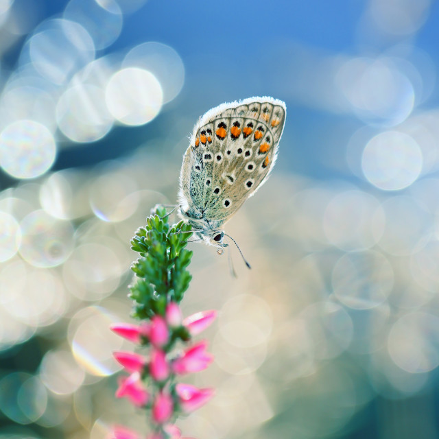 """""""A beautiful butterfly rests in the morning sunshine"""" stock image"""