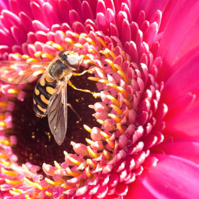 """""""pollination of a flower"""" stock image"""