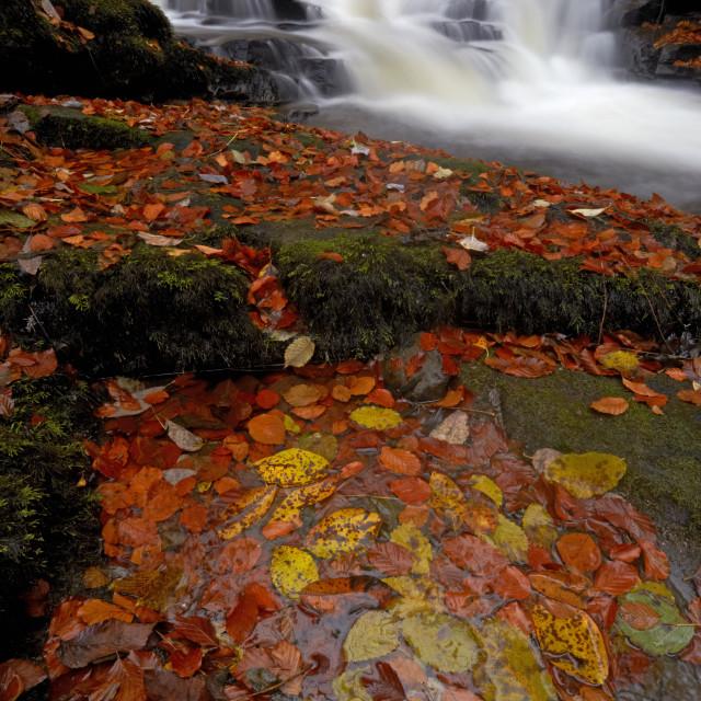 """The Moness burn flowing through the Birks of Aberfeldy in autumn, Aberfeldy,..."" stock image"