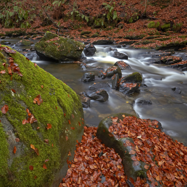"""""""The Moness burn flowing through the Birks of Aberfeldy in late autumn,..."""" stock image"""