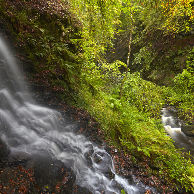 """""""A stream cascading into the Moness Burn which flows through the Birks of..."""" stock image"""