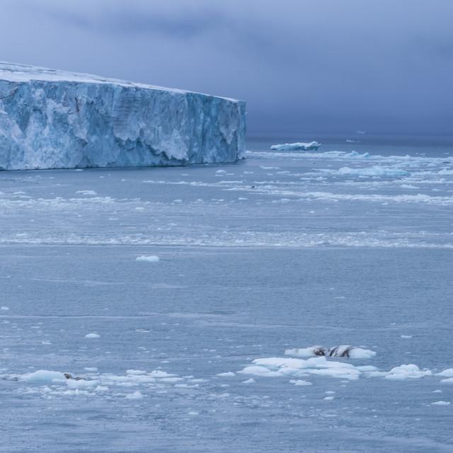 """Very huge glacier on Mc Clintok or Klintok Island, Franz Josef Land..."" stock image"