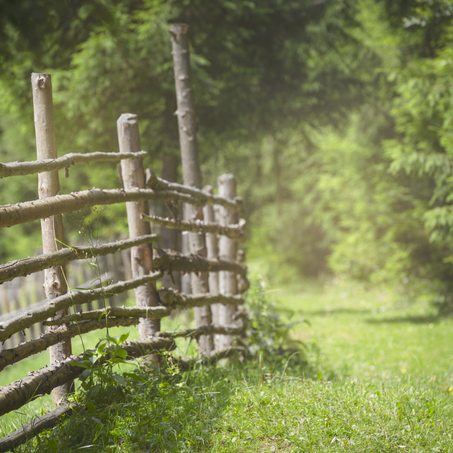 """Rustic fence and alley with green grass and sunlight"" stock image"