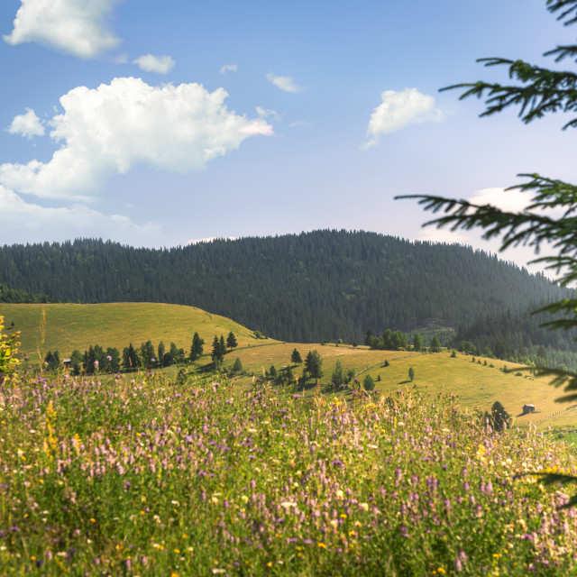 """Summer nature with forested mountains and blooming plains"" stock image"